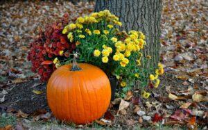 Pumpkin around plants & tree