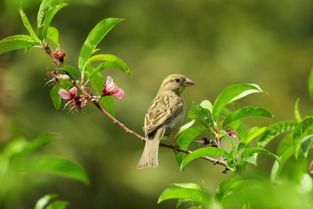 Small bird on green leaves