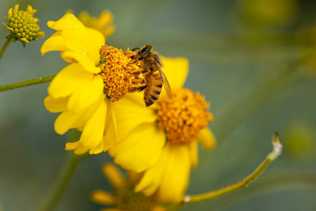 Yellow & Black Bee on a Flower