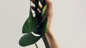 Hand in Plant