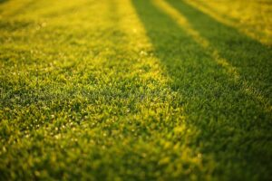 Healthy lawn